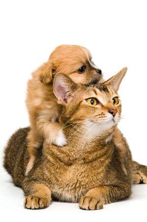 chiot et chaton: Chat et les chiots en studio