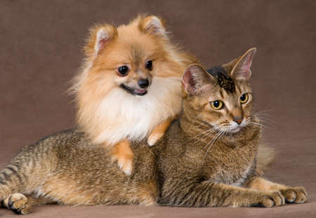 Cat and puppy  in studio Stock Photo