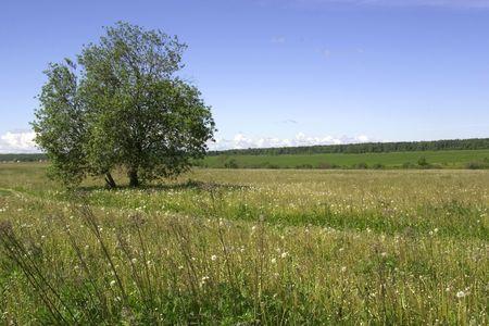 Summer landscape. Be single tree on a background blue sky. Stock Photo - 597360