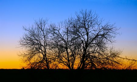 Branches silhouette of tree on sunset in autumn. Stock Photo - 3828451