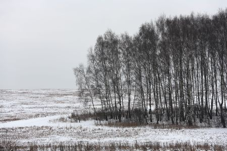 brich: Winter landscape with birch trees on an overcast day Stock Photo