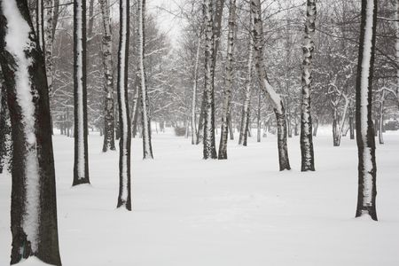 Winter park in blizzard. Snow and trees. Stock Photo - 6187487