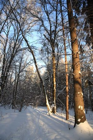 The casual scene is in the winter forest. Sunbeams fall on trees which throw shadow. Stock Photo - 6479432