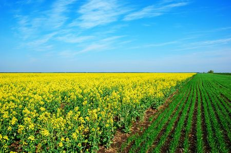 Spring rural field landscape photo