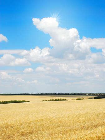 Wheat field rural landscape photo