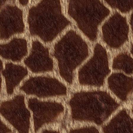 peltry: Giraffe skin texture