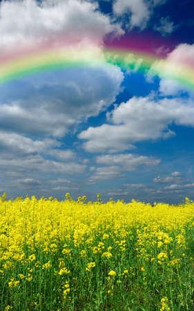 rainbow under meadow photo