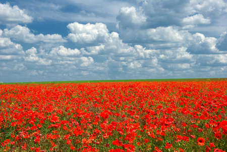 Poppy meadow over cloudy blue sky Stock Photo - 3990336