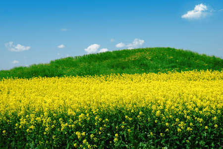 Green hill on canola field over cloudy blue sky photo