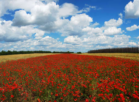 panorama of poppy meaow over cloudy sky Stock Photo - 5053294