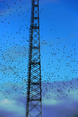 telecommunication tower and flying birds over cloudy sky photo
