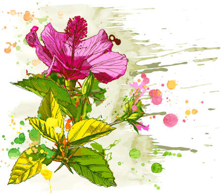 Hibiscus flower - vector watercolor paint. Elements on separate layers Vector