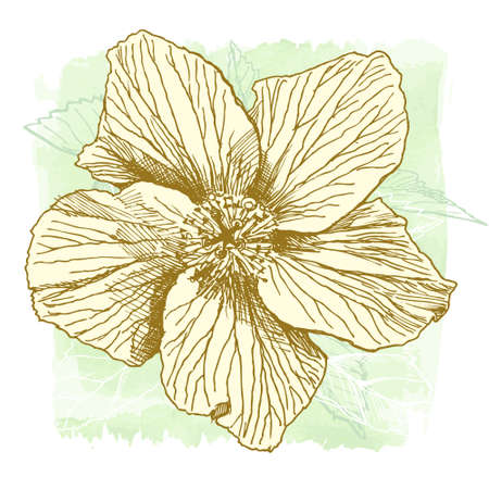 flora vector: Hibiscus flower - vector watercolor paint. Elements on separate layers