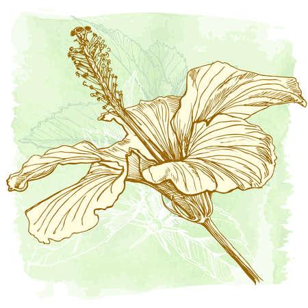 separato: Fiore di ibisco - vettore pittura acquerello. Elementi a strati separati  Vettoriali