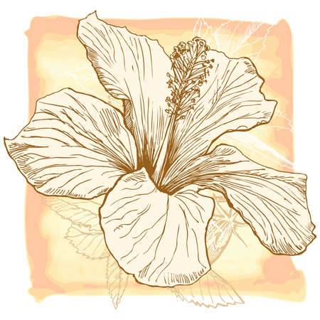 hibiscus flower: Hibiscus flower - vector watercolor paint. Elements on separate layers
