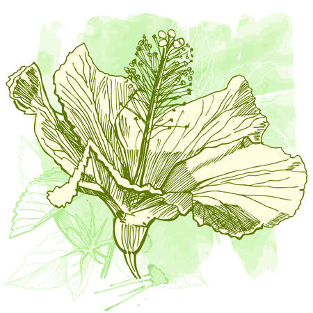 separate: Hibiscus flower - vector watercolor paint. Elements on separate layers