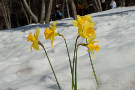 heats: Still the snow lays, but heats already spring sun, the first flowers reach for it, streams flow.