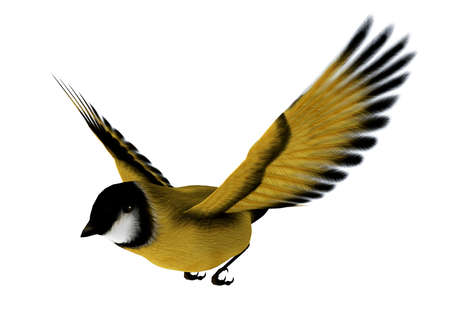 goldfinch: 3D digital render of a flying songbird goldfinch isolated on white background