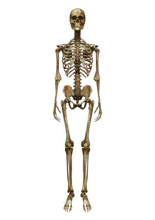 3D digital render of an old human male skeleton isolated on white background Stock Photo - 24949905