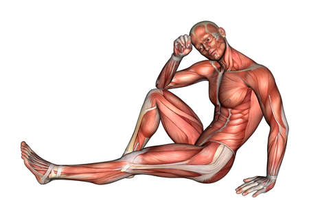3D digital render of a male anatomy figure with muscles map isolated on white  Stock Photo