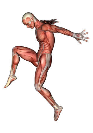 muscles: 3D digital render of a jumping male anatomy figure with muscles map isolated on white background