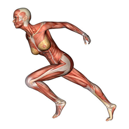 3D digital render of a running female anatomy figure with muscles map isolated on white background photo