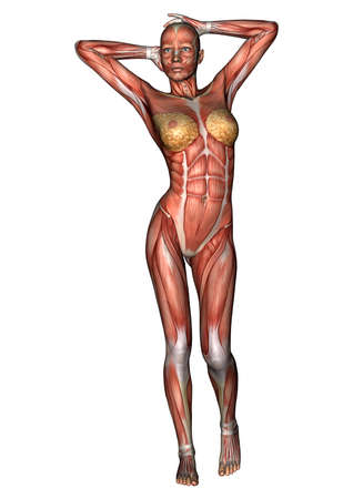 muscular organ: 3D digital render of a female anatomy figure with muscles map isolated on white background