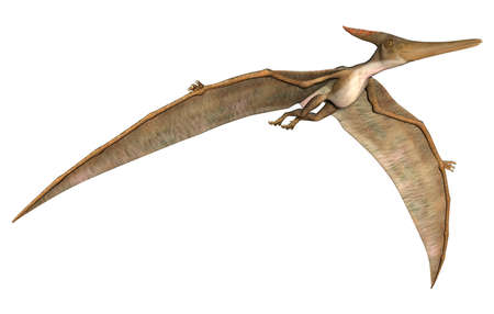 pteranodon: 3D digital render of a prehistoric flying reptile Pteranodon isolated on white background