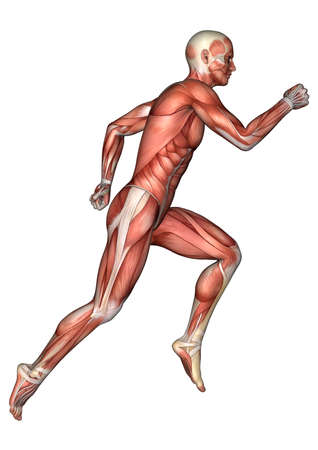 3D digital render of a running male anatomy figure with muscles map isolated on white background Stock Photo