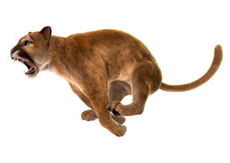 3d lion: 3D digital render of a jumping puma, also known as a cougar, mountain lion, or catamount, isolated on white background