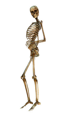 perform: 3D digital render of a human smiling skeleton isolated on white background