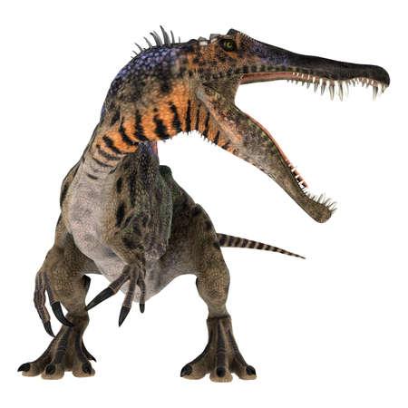 lagartija: 3D digital hacen de un dinosaurio del Cret�cico curioso Spinosaurus o lagarto espinoso aislado en fondo blanco