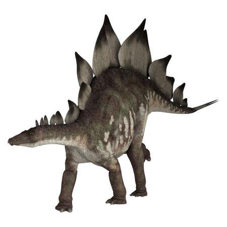 dinosauro: Digitale 3D rendering di un dinosauro stegosaurus isolato su sfondo bianco Archivio Fotografico