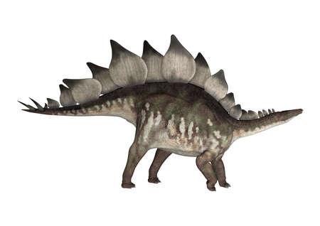 stegosaurus: 3D digital rinde de un estegosaurio de dinosaurio aislados sobre fondo blanco Foto de archivo