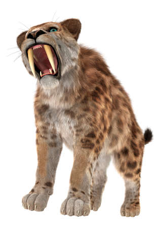 animal teeth: 3D digital render of a smilodon or a saber toothed cat isolated on white background Stock Photo