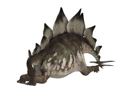 herbivore: Stegosaurus Stenops or roofed lizard, a large herbivore dinosaur from the Late Jurassic Period Stock Photo