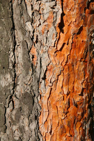 creases: Bark Stock Photo