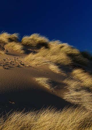 goldish: sand dune , goldish grass and dark blue sky