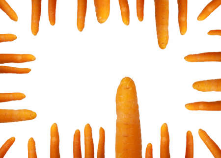 different fresh clean  carrots isolated on white photo