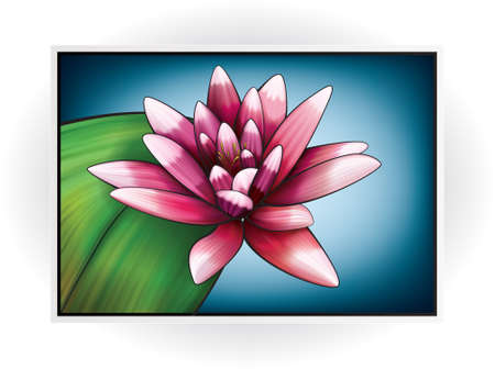 lily vector: Nymphaeaceae (Water Lily) - Vector Pink Flower Illustration