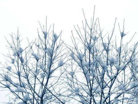 First snow on the branches, the winter Stock Photo - 646242
