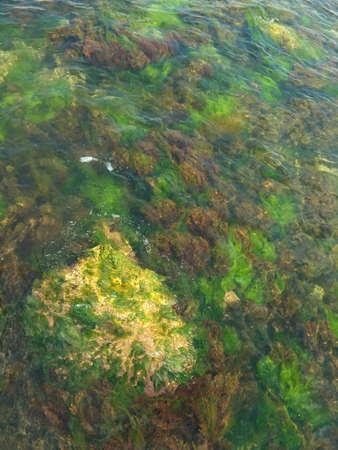 multicolored algae and stone in sea Stock Photo - 646266