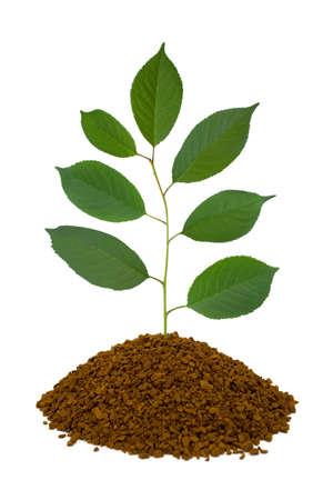 peace symbols: Plant in land, isolated on white background Stock Photo