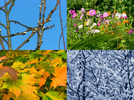 Spring, summer, autumn and winter, nature seasons background  photo