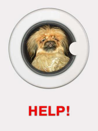 claustrophobia: Afraid dog (pekinese) in washing machine - Help!