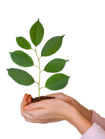 Green plant in women hands, isolated on white background photo