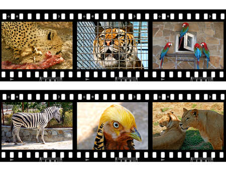 Animals in frames of film (my photos), isolated on white background photo