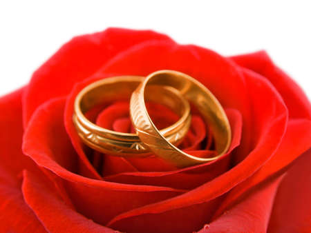 anniversary flower: Rose and wedding rings, isolated on white background Stock Photo