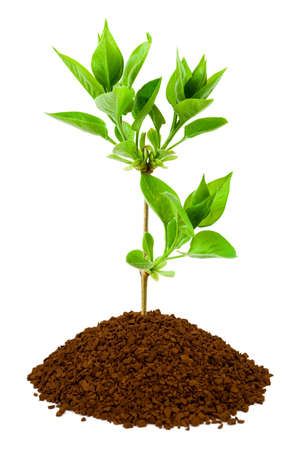 Plant in land, isolated on white background photo