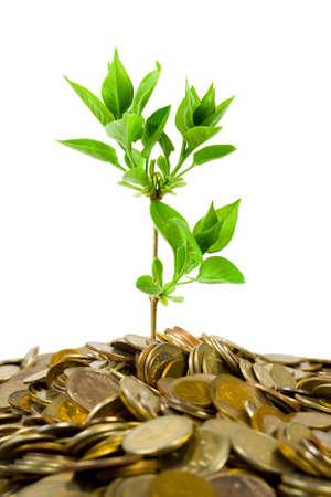 sembrando un arbol: Monedas y plantas, aislado en fondo blanco